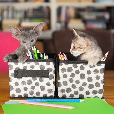 Two Kittens Sitting in Pencil Boxes