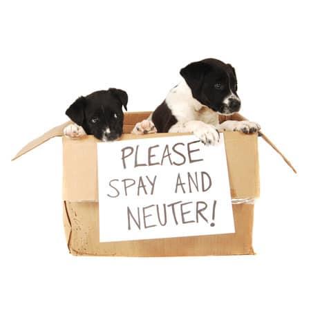 Cincinnati Area Spay Neuter Resources
