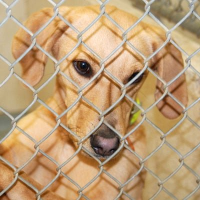 Sponsor a Kennel at the Hamilton County Animal Shelter