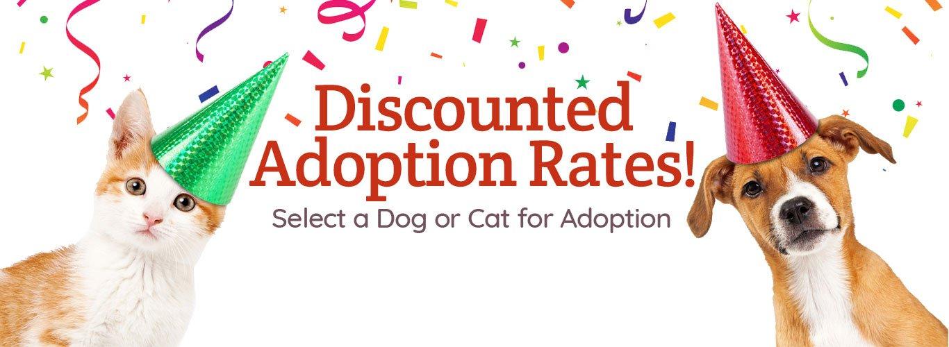 Discounter Adoption Rates Banner