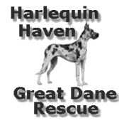 Harlequin Haven Great Dane Rescue Logo